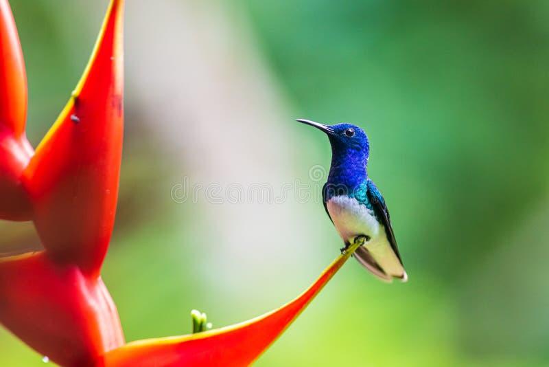 Een close-up van een kleurrijke vogel royalty-vrije stock fotografie
