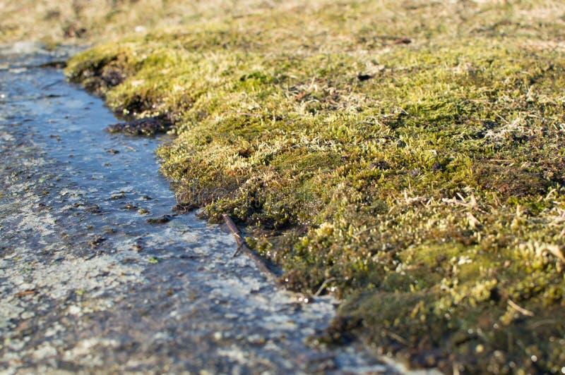 Een close-up van een mos stock afbeeldingen