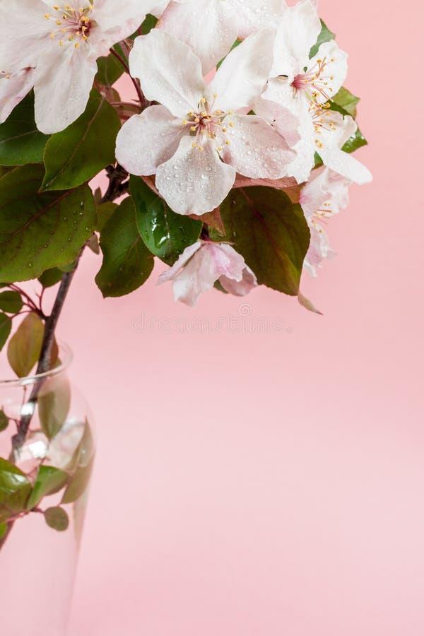 Een close-updeel van nat takje van roze appelboom die zich in glasvaas bevinden op bleek - roze achtergrond stock foto