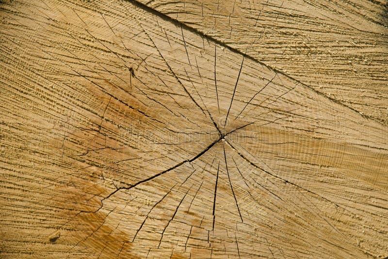 Een close-upmening van de textuur van een natuurlijke besnoeiing van een beukboom stock foto's