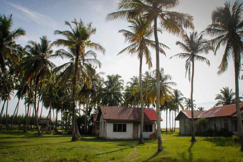 Een comfortabel buitenhuis en heel wat kokospalmen dichtbij de oceaan Indonesië, Sumatra stock afbeeldingen