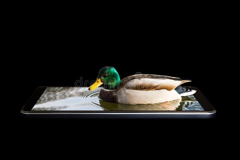Een conceptuele creatieve 3D volumetrische foto van een vogel die, het zitten het afdrijven in het zeewater met golven in een sma stock foto's