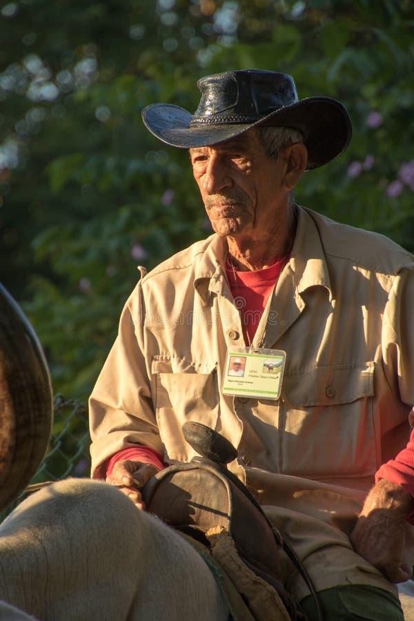 Een Cowboy berijdt een os in stad stock afbeelding