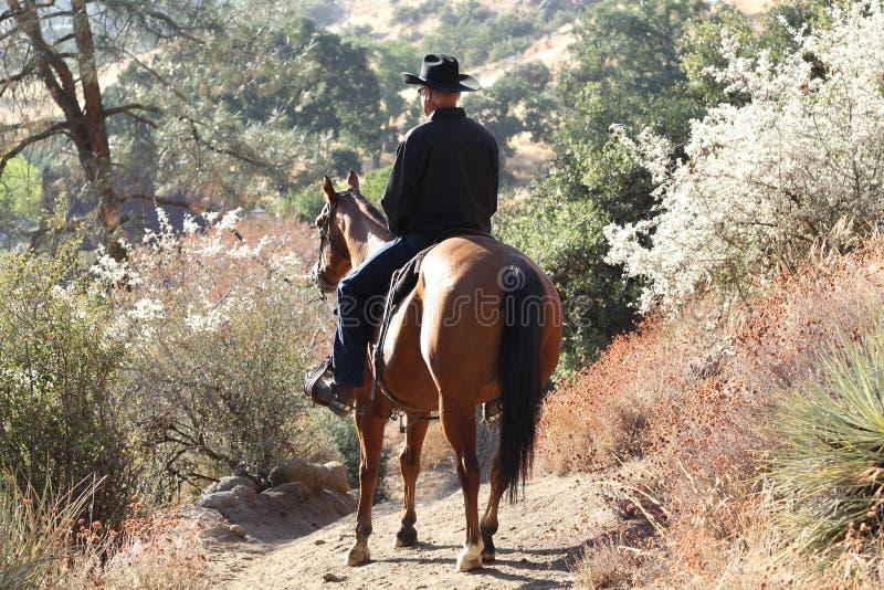 Een cowboy in de zon met installaties. stock foto