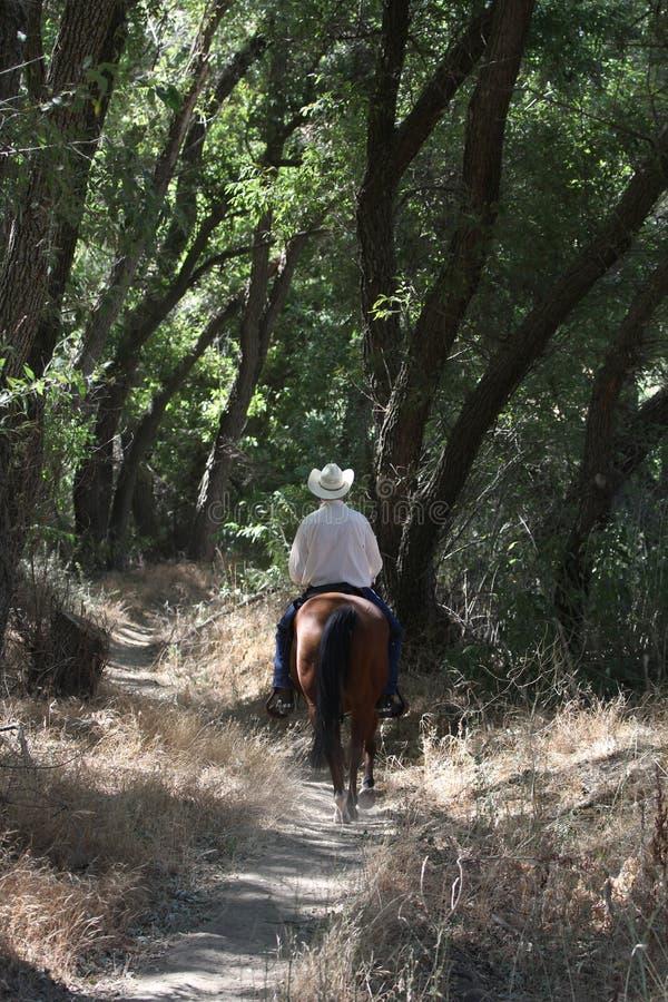 Een cowboy die zijn paard in een bos berijden. royalty-vrije stock foto