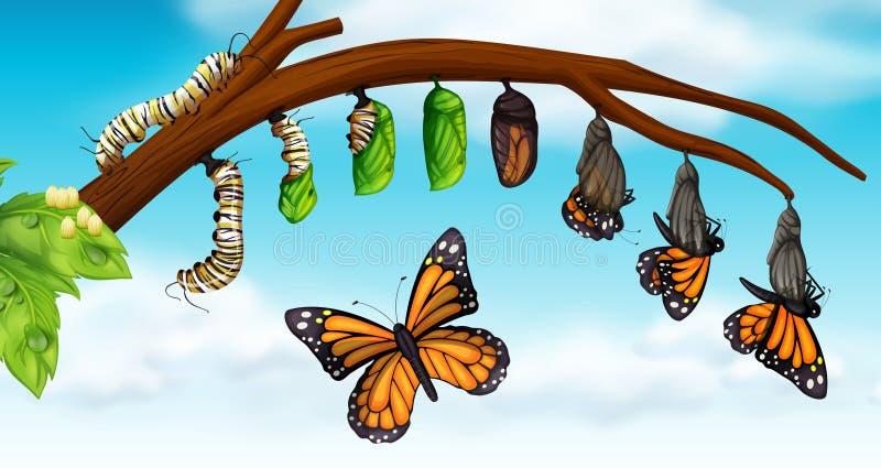 Een Cyclus van het Vlinderleven royalty-vrije illustratie
