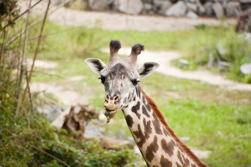 Een dag bij de dierentuin royalty-vrije stock foto