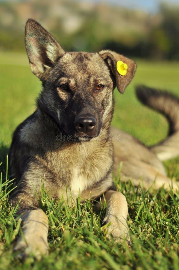 Een dakloze Hond royalty-vrije stock foto's