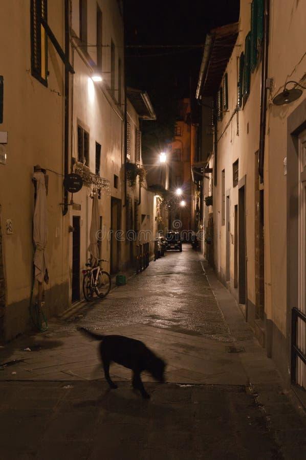 Een dakloze hond wandelt rond de straat stock foto's
