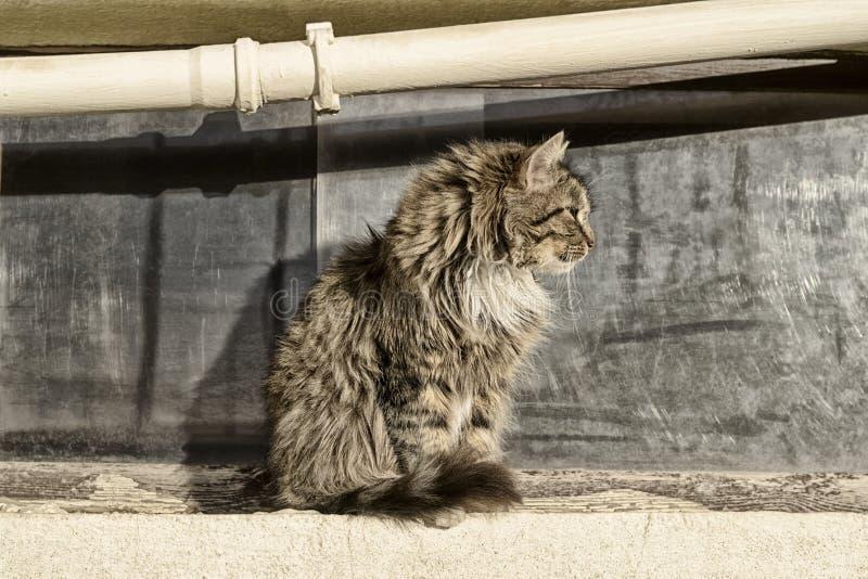 Een dakloze mens bevlekte een kattenzitting in profiel tegen het venster en de pijp royalty-vrije stock fotografie