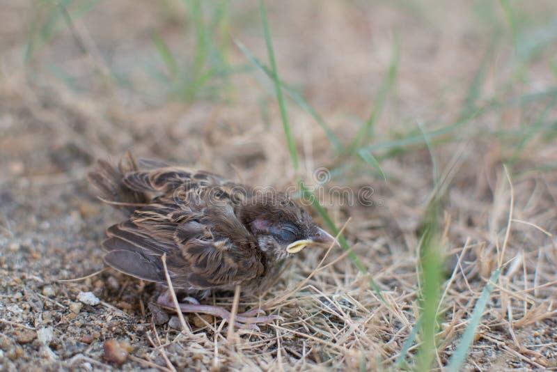 een daling van de babyvogel fron een boom stock afbeeldingen