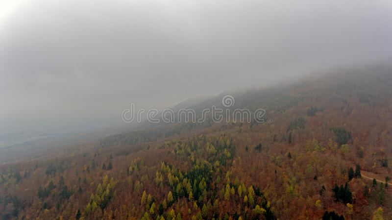 Een de herfst gekleurd pijnboombos wordt gesilhouetteerd tegen een bewolkte, nevelige achtergrond van heuvels en bergen stock afbeelding