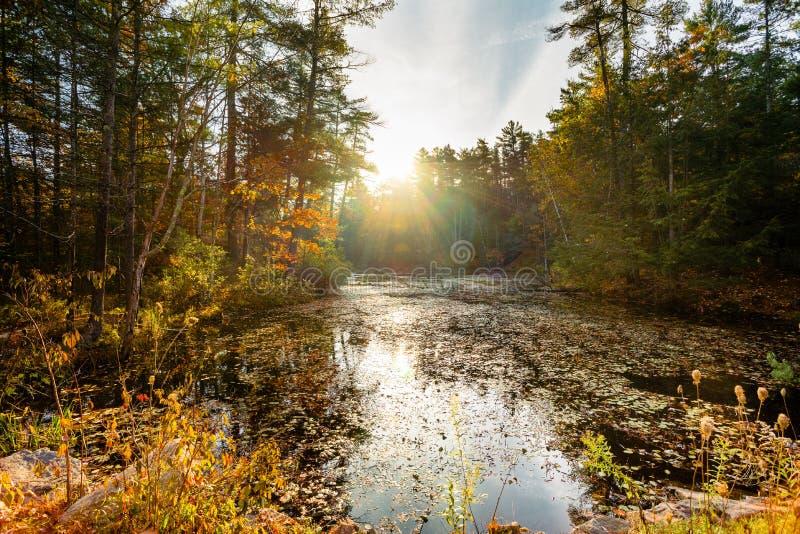 Een de herfstzonsopgang over kalme landelijke vijver royalty-vrije stock fotografie