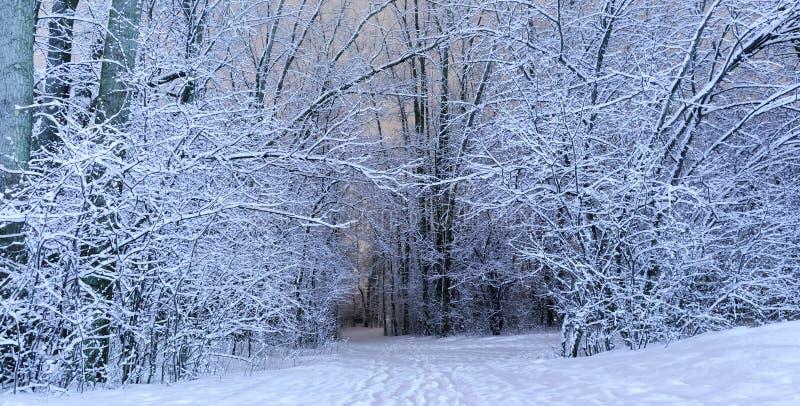 Een de winter toneellandschap in koud seizoen Prachtige witte fores stock fotografie