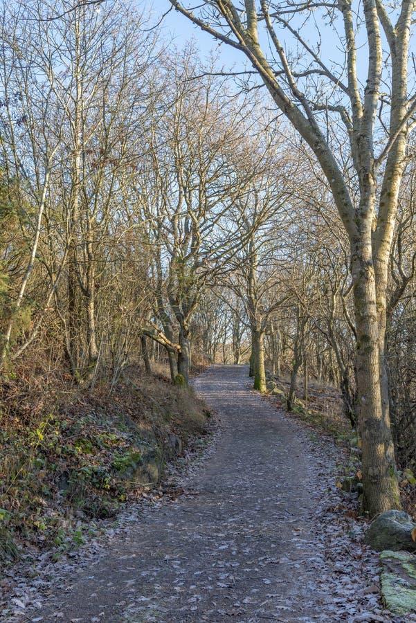 Een de wintergang in het bos stock afbeelding