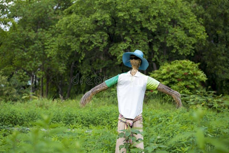 Een de zonglas van vogelverschrikkerwaren en een T-shirthoed en broek stock afbeelding
