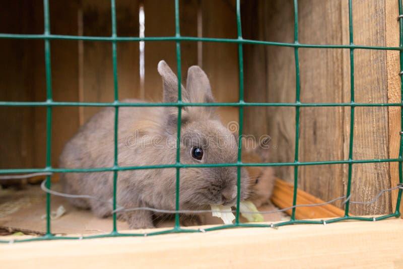 Een decoratief konijn in een kooi eet kool stock foto's