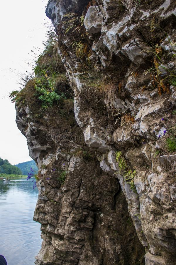 Een deel van de rots met installaties op het worden gekweekt die stock foto