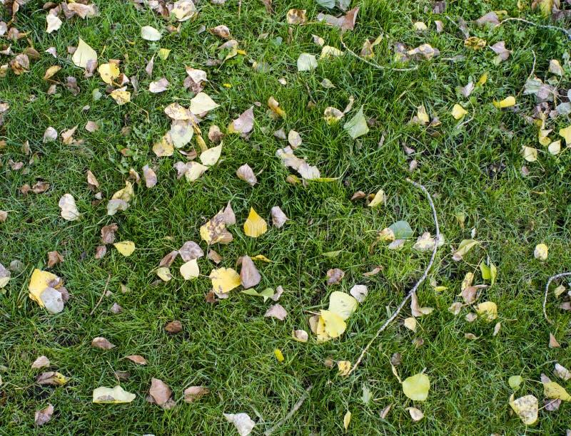 Een deel van een groene weide met de bladeren van de dalingsherfst royalty-vrije stock fotografie