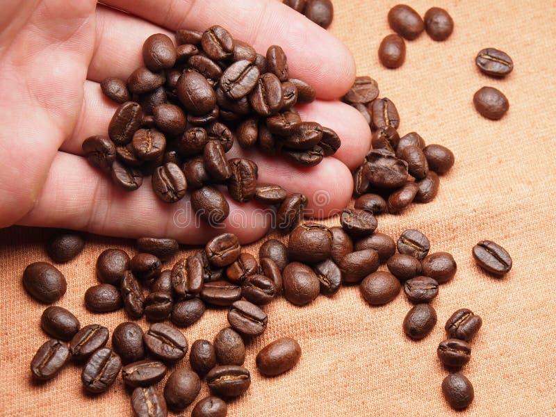 Een deel van hand met de bonen van het koffiegewas op stoffentextiel stock foto's
