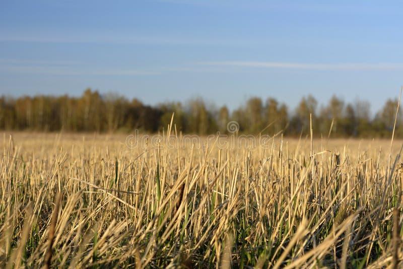 Een deel van het samengeperste gras stock afbeeldingen