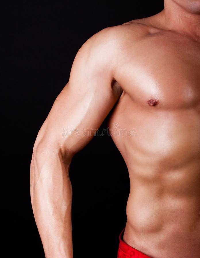 Een deel van spier mannelijk torso stock foto's