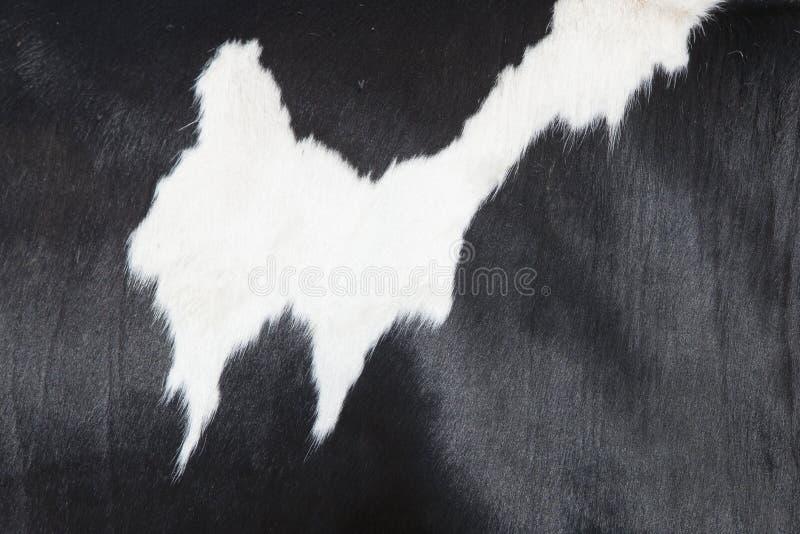 Een deel van zwart-witte huid aan kant van koe royalty-vrije stock fotografie