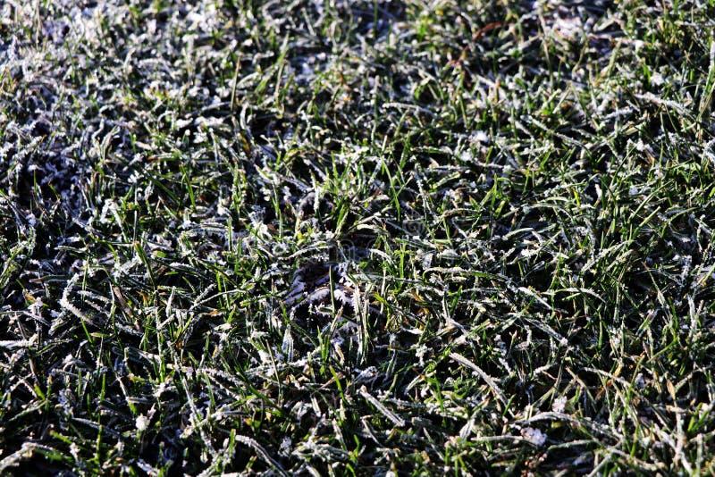 Een detail op gras met rijp wordt behandeld die royalty-vrije stock afbeelding