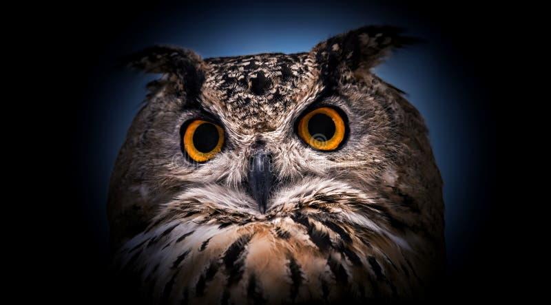 Een dichte blik van de oranje ogen van een gehoornde uil op een donkere achtergrond stock fotografie