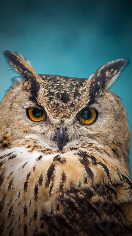 Een dichte blik van de oranje ogen van een gehoornde uil op een vage achtergrond stock foto