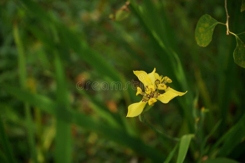 Een dichte omhooggaande macromening van een gele bloem op groene bokehachtergrond royalty-vrije stock foto's