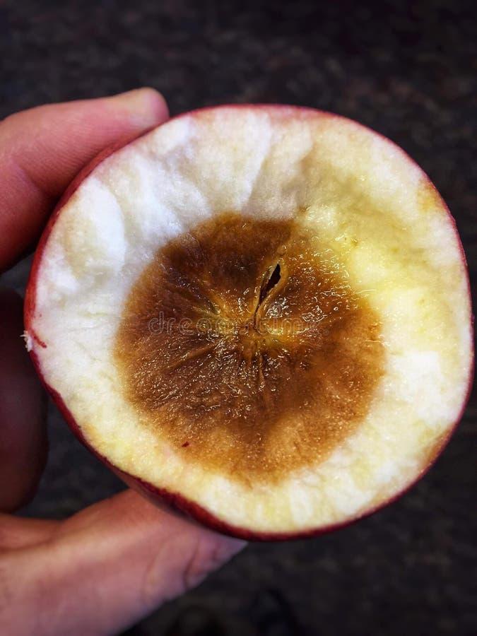 Een dichte omhooggaande mening die van hand een rotte appel houden De hoogste helft wordt afgesneden zodat kunt u de binnenkant v royalty-vrije stock fotografie