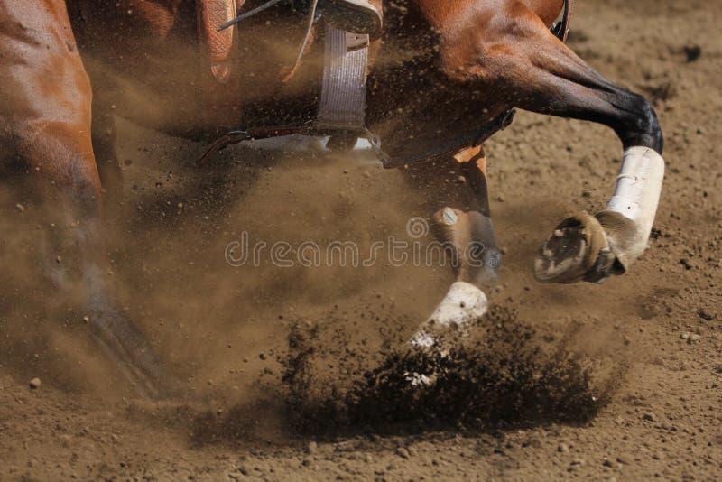 Een dichte omhooggaande mening van paard het galopperen royalty-vrije stock fotografie