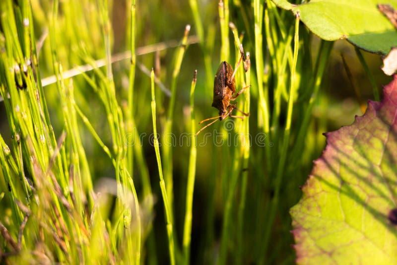 In een dik gras in een zonnige weide kruipt een kleine kever, het over de vegetatie van één installatie aan een andere in één of  stock afbeelding