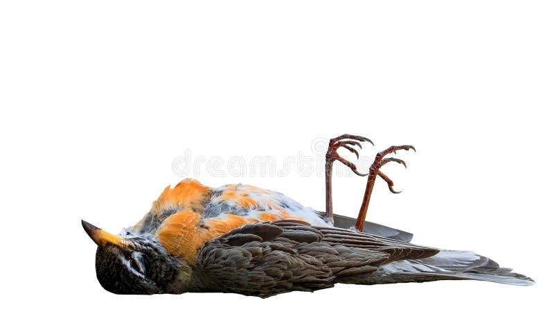 Een dode die vogel met voeten omhoog op wit worden geïsoleerd royalty-vrije stock foto's