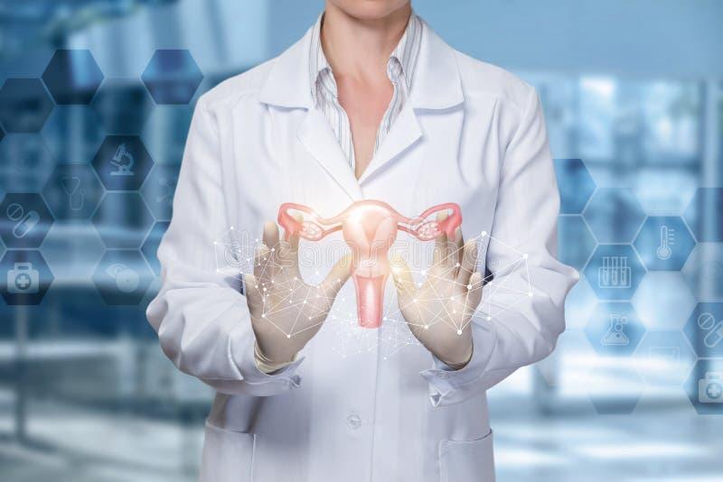 Een dokter toont de baarmoeder van de vrouw royalty-vrije stock afbeelding