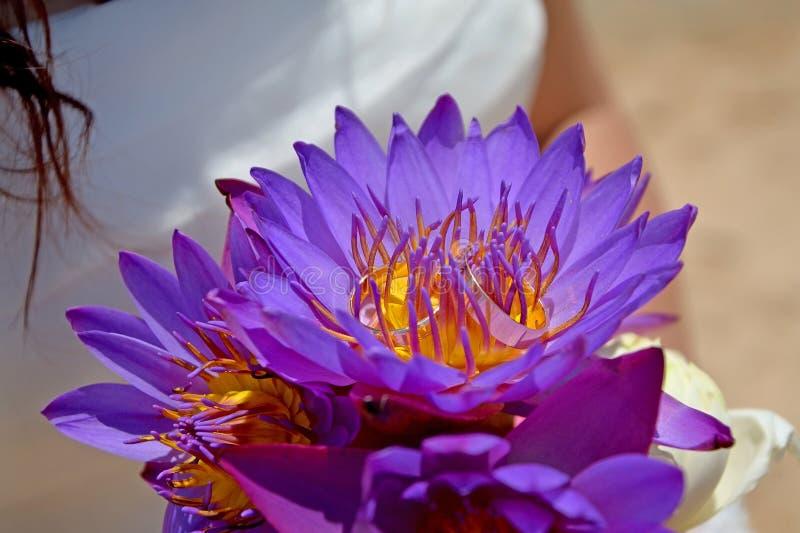 Een donkerbruine bruid in een huwelijkskleding die een boeket van purpere lotuses houden Trouwringen in lotusbloemknoppen royalty-vrije stock foto's