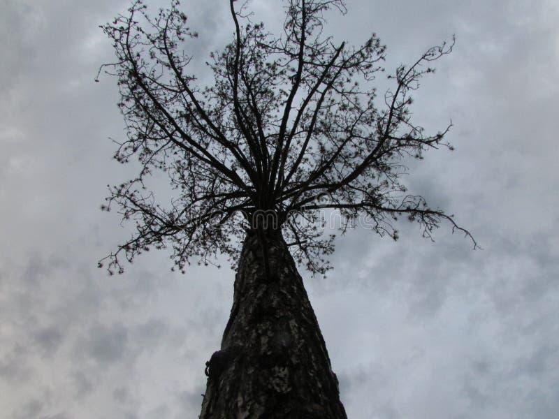 Een donkere boom in een donker milieu stock afbeeldingen