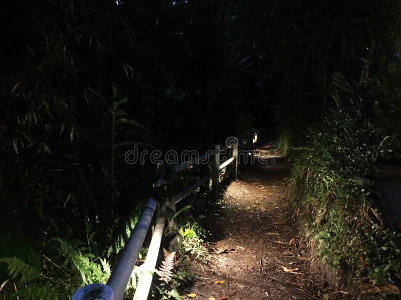 Een donkere die weg scarsely met kleine dode bladeren in het regenwoud wordt aangestoken en wordt behandeld stock foto
