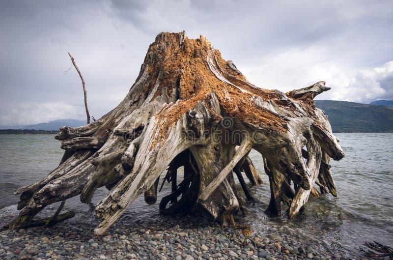 Een doorstane stomp waste omhoog op kust royalty-vrije stock foto's