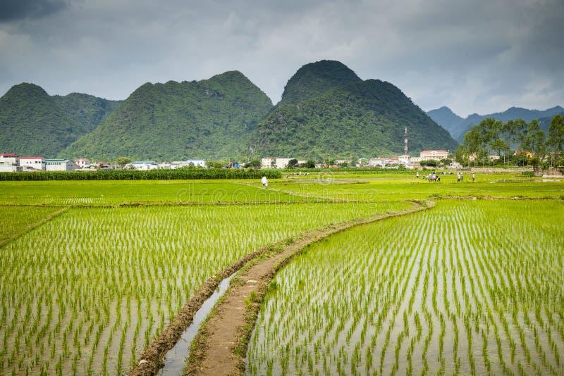 Een dorp in noordelijk Vietnam stock foto's