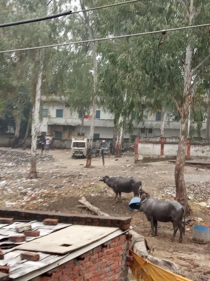 Een dorpje in Lucknow City, India royalty-vrije stock fotografie