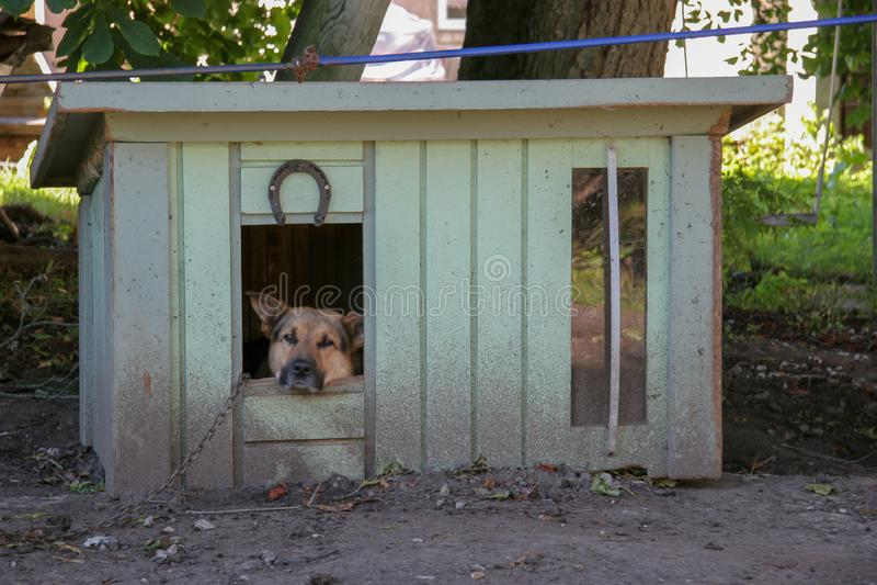 Een droevige herdershond zit in een cabine op een ketting en onderzoekt de camera Close-up stock foto