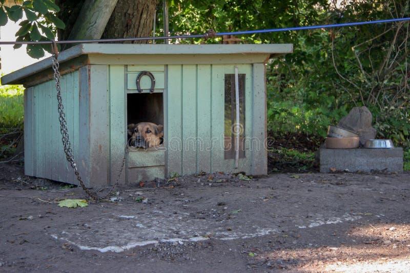 Een droevige herdershond zit in een cabine op een ketting en ziet weg eruit Dichtbij zijn kommen voor voedsel stock foto's