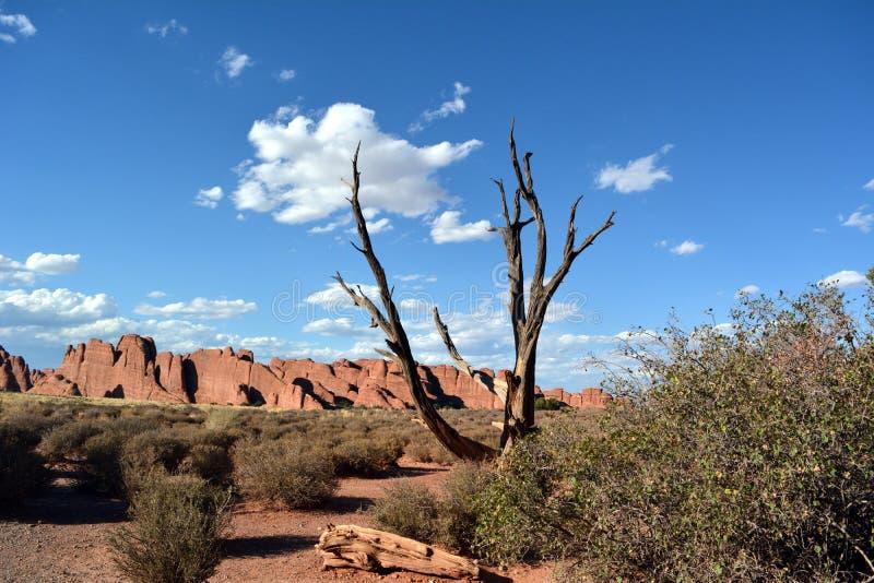 Een droge boom tegen een blauwe hemel en rode rotsen in Bogen Nationaal Park stock foto