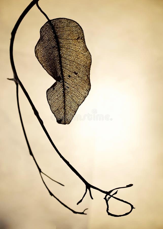 Een droog blad stock fotografie