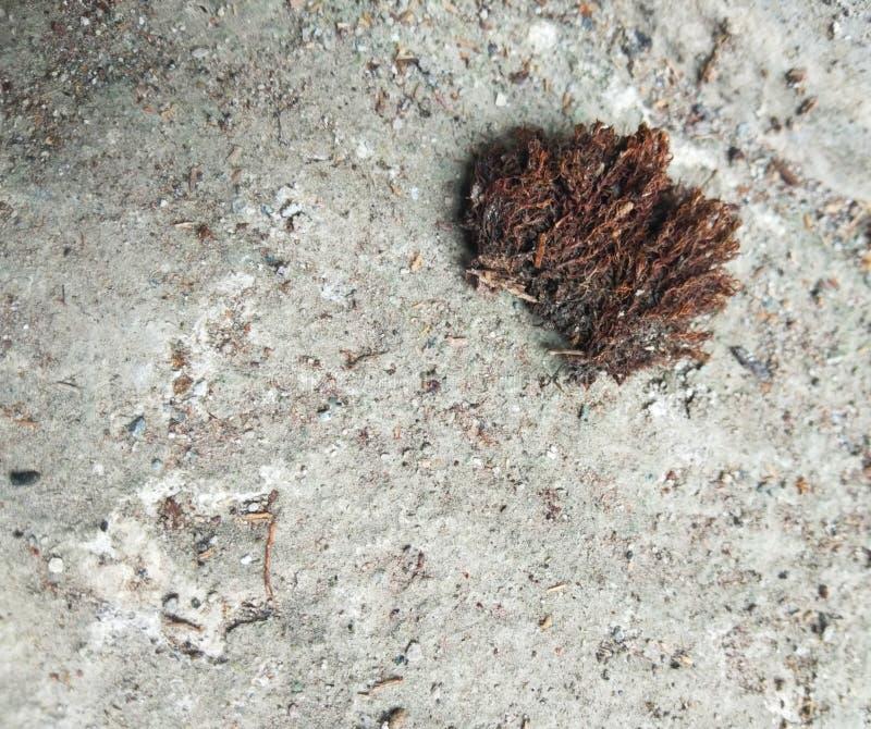 Een droog mos in een concrete bestrating royalty-vrije stock fotografie