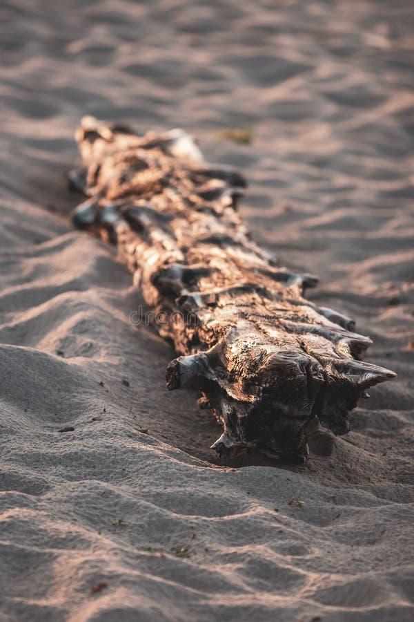 Een droog oud logboek ligt in het zand royalty-vrije stock afbeelding