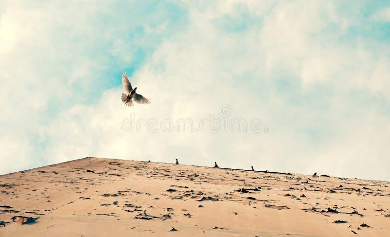 Een duif die, duiven bevindt zich op blauwe hemel van bodemmening vliegen stock foto's