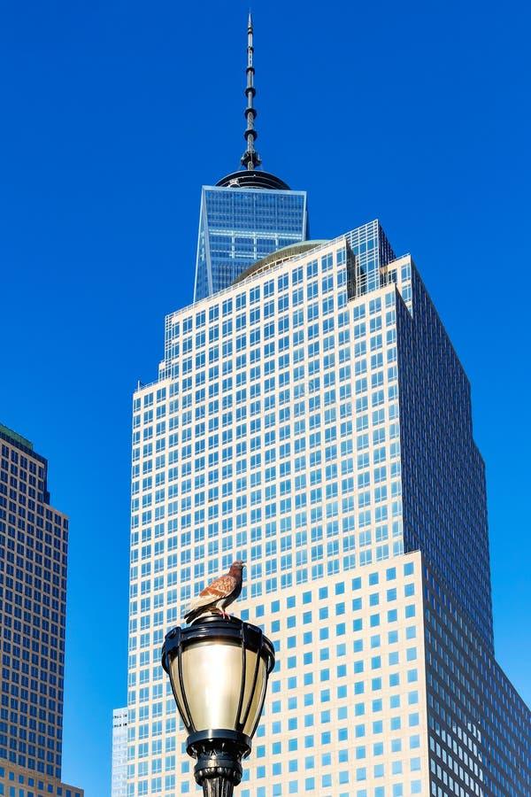 Een duif op een straatlantaarn met op de achtergrond de gebouwen van Wintergarden in New York, Verenigde Staten stock afbeelding